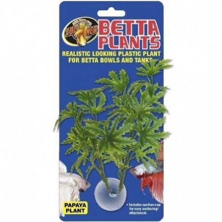 Planta Betta de papaya