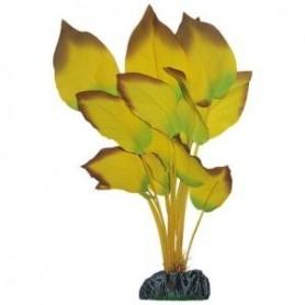 Anubia Amarilla de Seda