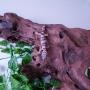 Gecko Mack Poss Macho