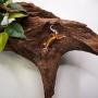 Cordylus Tropidosternum (lagarto blindado o espinoso)
