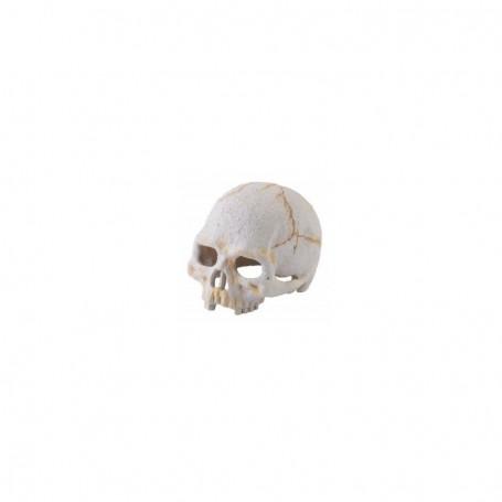 Refugio Fósil Primate nano