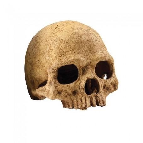 Refugio fósil Cráneo primate Exo Terra