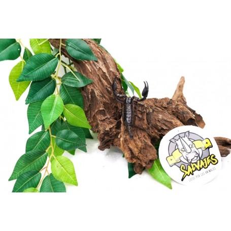 Escorpión gigante asiatico de bosque Heterometrus