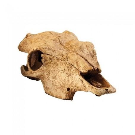 Refugio fósil Cráneo búfalo Exo Terra