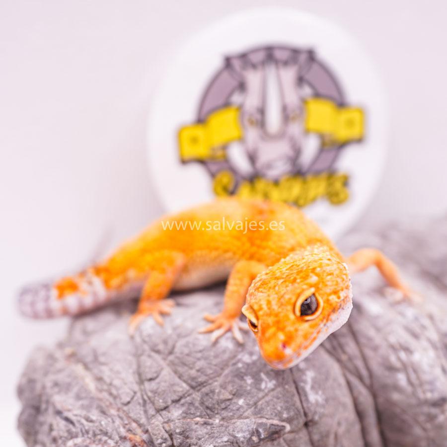 Gecko leopardo enfermedades